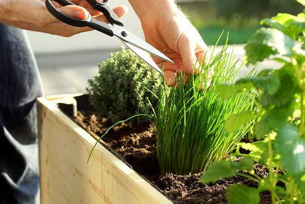 В России могут появиться дома со встроенными огородами