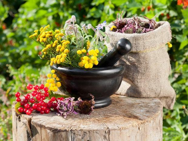 полезные свойства растений