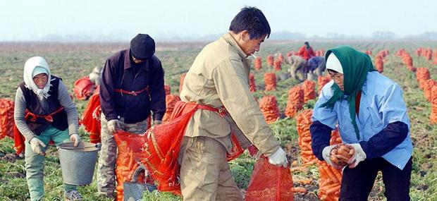 Он подчеркнул, что все 3 миллиона гектаров пахотных земель в Дальневосточном федеральном округе теперь доступны фермерам. Дубровский, добавил, что это место подходит для молочного животноводства и выращивания сельскохозяйственных культур, таких как соевые бобы, пшеница и картофель.