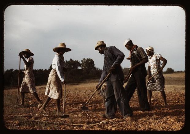 Рабы на хлопковой плантации. Источник: inkbluesky.wordpress.com