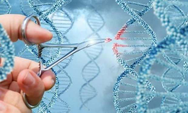 В Китае активно разрабатывают технологии точечной замены генов для лечения рака