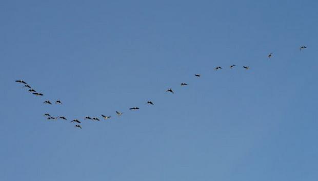 птицы_самолет