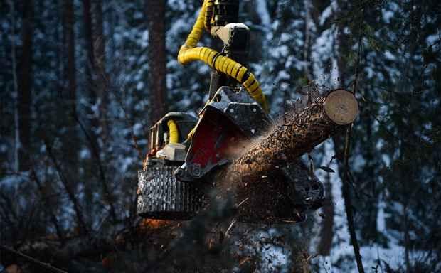 Рослесхоз предложил запретить скупку китайцами леса у жителей Сибири