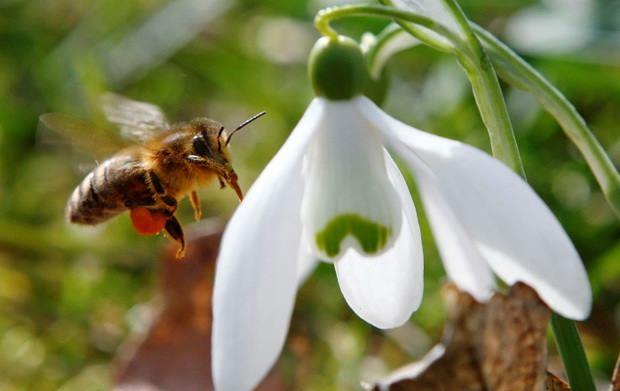 Дроны размером с пчелу становятся реальностью