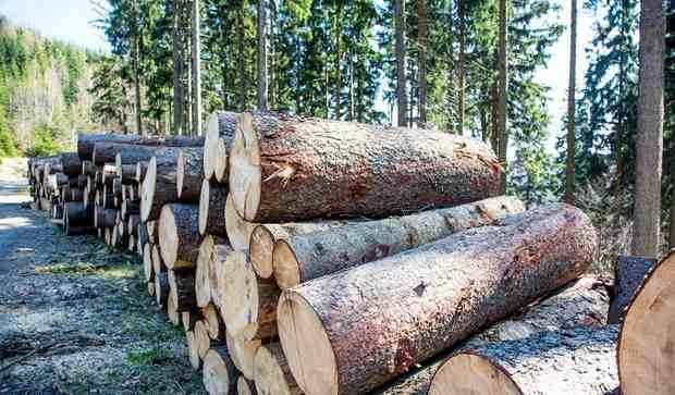 Кто виноват в истреблении российского леса?