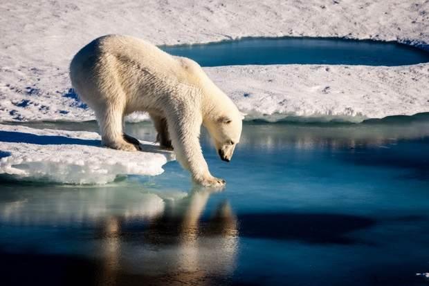 Ученые назвали сроки «размораживания» Северного Ледовитого океана