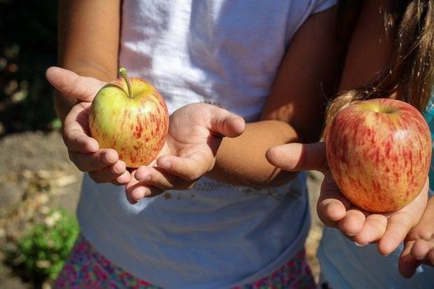 Детям позволительно даже четырех-разовое питание: между обедом и ужином для них добавляется легкая трапеза — полдник