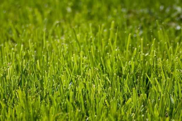 DAPRA разрабатывает ~умный газон~, который кричит на нарушителей воинской дисциплины