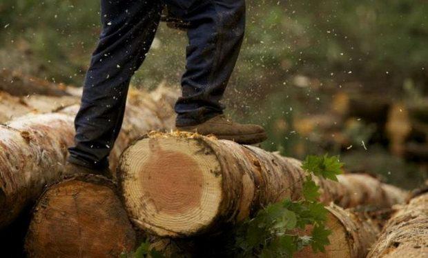 Лесопромышленники хотят приватизировать леса