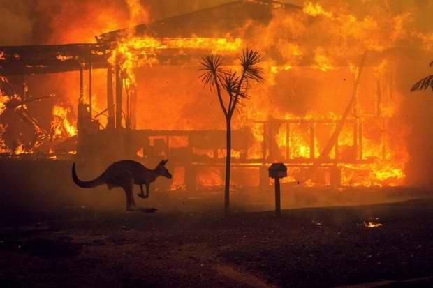 Более миллиарда животных погибло в пожарах в Австралии