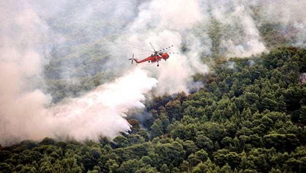 СМИ: при лесном пожаре в Калифорнии погибли 29 человек